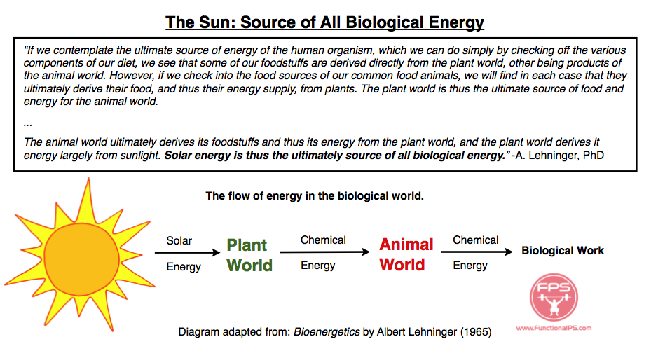 Short Paragraph on Sun as a Primary Source of Energy